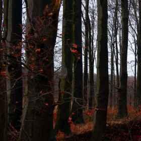 Waldfotografie _2