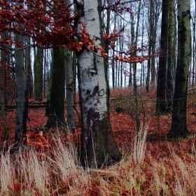 Waldfotografie _3