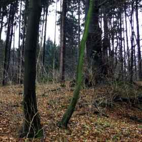 Waldfotografie _5